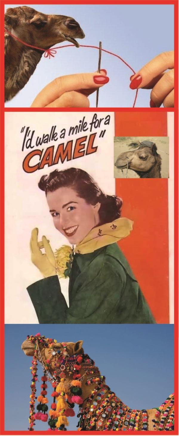 Camel.trio
